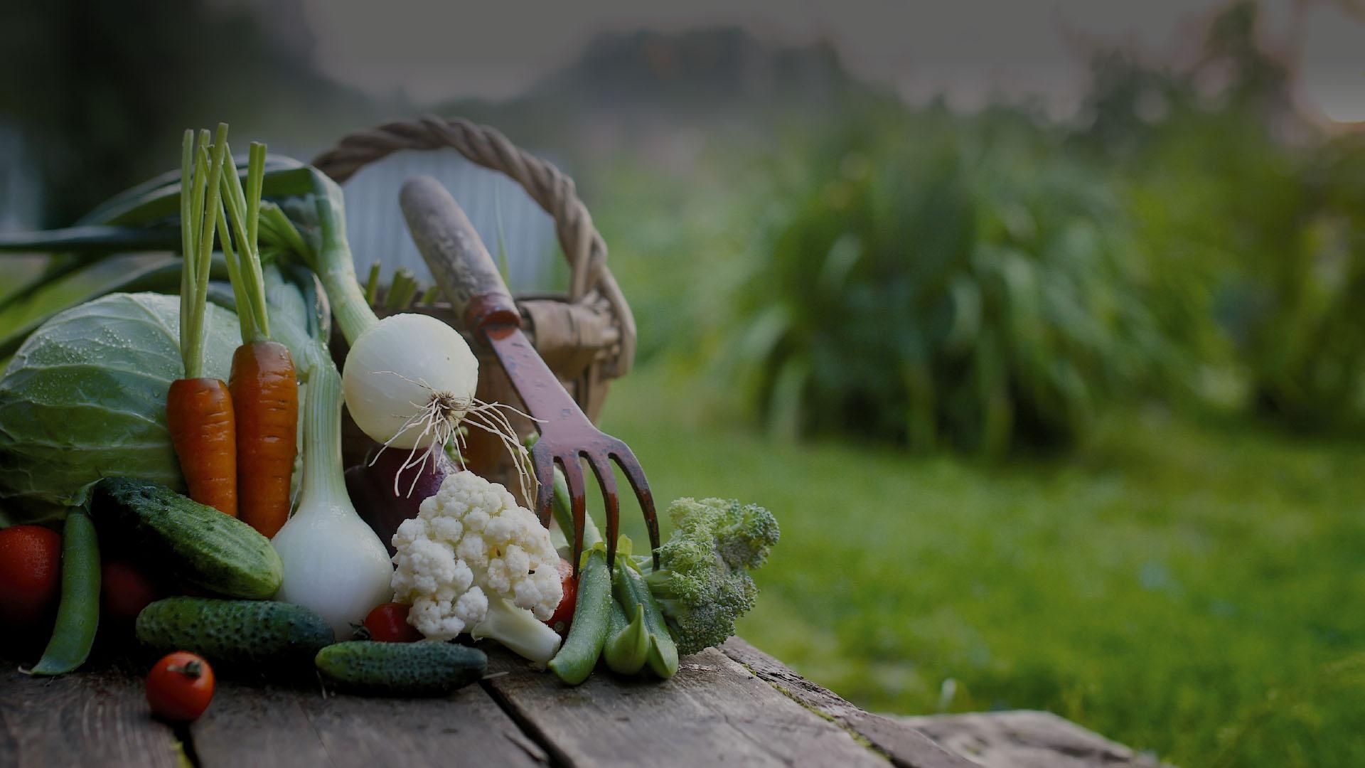 bodegon verduras